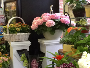 About us creative flowers by amodios white plains flower shop mightylinksfo